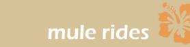 Molokai Mule Rides