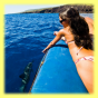 Oahu Dolphin Watching Tours Hawaii