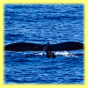 Oahu Whale Watching Tours Hawaii